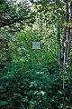 21-215-5002 пам'ятка природи Бузок угорський (18).jpg