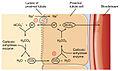 2715 Conservation of Bicarbonate in Kidney-01.jpg