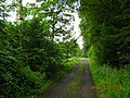 36304 Alsfeld, Germany - panoramio (1).jpg