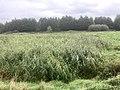 5804 Groen.Westpark.DeHeld.Leegkerk.202009 Brug Water Zwedenlaan Tarralaan Scounting VariaSki Hoogkerk Buitengebied.jpg
