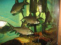 Aquarium And Photography Image