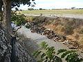 9664jfDomesticated ducks Nueva Ecijafvf 01.JPG