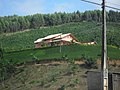 AMR - PLANTATION (agricultura) - panoramio.jpg