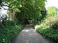 A Leafy Lane - geograph.org.uk - 421831.jpg