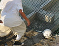 A detainee goes after a soccer ball within the outdoor recreation area of Camp Six at Joint Task Force Guantanamo DVIDS373570.jpg