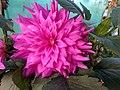 A flower2.jpg