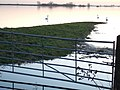 A hint of pink - The Ouse Washes at Sutton Gault - geograph.org.uk - 1615351.jpg