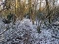 A snowy Street End Copse - geograph.org.uk - 1637869.jpg