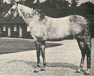 Abernant (horse) British-bred Thoroughbred racehorse