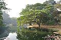 Acharya Jagadish Chandra Bose Indian Botanic Garden - Howrah 2011-01-08 9740.JPG