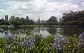 Agapanthus in Sao Paulo (5293878215).jpg
