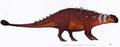 Akainacephalus (updated).png