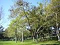 Aldrich Park, UCI,2.jpg