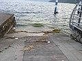 Alghe portate dal lago-Castro - panoramio.jpg