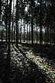 Allums Grove - geograph.org.uk - 1211939.jpg