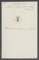 Amniscus - Print - Iconographia Zoologica - Special Collections University of Amsterdam - UBAINV0274 034 24 0002.tif