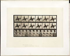 Animal locomotion. Plate 667 (Boston Public Library).jpg