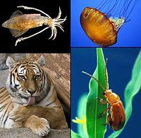 Animalia diversity-2.jpg