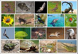 Animals-of-Israel-ver004.jpg