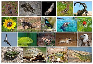 Wildlife of Israel