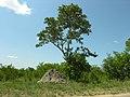 Ant Hill (393919863).jpg