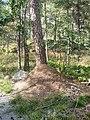 Ant hill on Djurgarden (52332).jpg