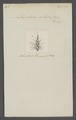 Anthophora - Print - Iconographia Zoologica - Special Collections University of Amsterdam - UBAINV0274 045 09 0012.tif