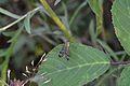 Araignées, insectes et fleurs de la forêt de Moulière (Les Chirons Noirs) (29044144495).jpg