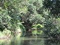 Arana Hills kedron brook E from hcc.jpg