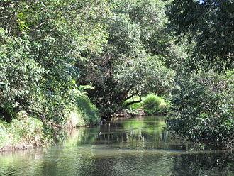 Arana Hills, Queensland - Kedron Brook, 2013
