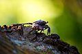 Arboreal crab (7159985691).jpg