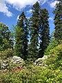 Arboretum rhododendrorum.jpg