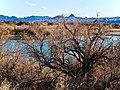 Arizona (5486950530).jpg