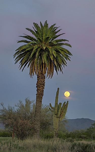 File:Arizona Moon.jpg