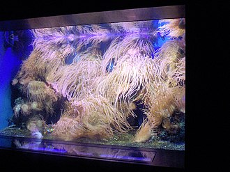 Natura Artis Magistra - Image: Artis aquarium Photo by Persian Dutch Network 2006