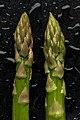 Asparagus Tips (4591573679).jpg