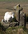 Assortment at Mount Misery - geograph.org.uk - 1500914.jpg