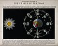 Astronomy; a translucent diagram of the phases of the Moon. Wellcome V0025021.jpg