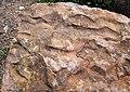 Asymmetrical ripple marks in quartzite (Baraboo Quartzite, upper Paleoproterozoic, ~1.7 Ga; southern shore of Devil's Lake, Devil's Lake State Park, Wisconsin, USA) 2 (18635072300).jpg