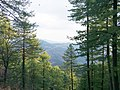 At the top of Murree Hills.jpg