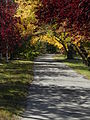 Autumn Leaves - Saskatoon.jpg