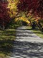 Autumn Leaves - Saskatoon.jpg