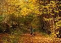 Autumn Leaves - geograph.org.uk - 876879.jpg