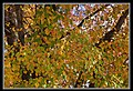 Autumn Leaves begin to fall-049 (5704895608).jpg