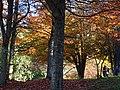 Autumn Scene in Stanley Park - Vancouver - BC - Canada - 11 (26198190799) (2).jpg