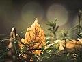 Autumn everywhere - Flickr - A Peach.jpg