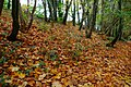 Autumn leaves - geograph.org.uk - 596232.jpg
