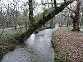 Auzette Limoges parc Mas-Rome (6).JPG