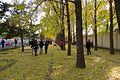 Avenue of ginkgo trees at Diaoyutai (20161115143423).jpg