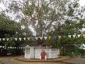 Avukana Buddha Statue 29.JPG